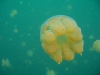 090819_jellyfish_lake15.jpg