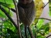 091017_tarsier13.jpg
