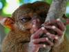 091017_tarsier18.jpg