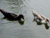 101202_birds03