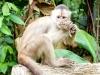 White capucine Peter