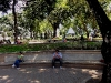 Park in David