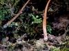 Rare Salamander