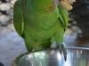 Green Amazon