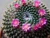 110118_cactus02