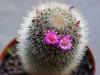 110118_cactus05