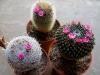 110118_cactus06