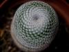 110118_cactus12