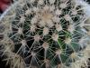 110118_cactus13