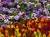110118_flowershow_boquette06