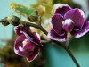 110118_orchids02