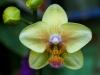 110118_orchids05
