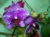 110118_orchids08