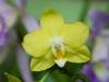 110118_orchids10