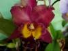 110118_orchids15