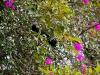 110130_butterfly_garden01