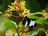 110130_butterfly_garden03