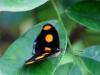110130_butterfly_garden06