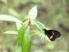 110130_butterfly_garden07