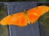 110130_butterfly_garden09