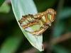 110130_butterfly_garden11