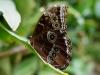 110130_butterfly_garden12