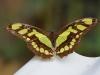 110130_butterfly_garden13