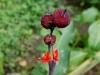 110130_butterfly_garden14