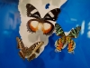 110205_butterflygarden_key_west01