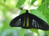 110205_butterflygarden_key_west07