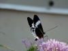 110205_butterflygarden_key_west09