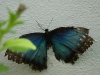 110205_butterflygarden_key_west11