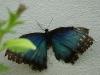110205_butterflygarden_key_west11