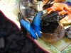 110205_butterflygarden_key_west12
