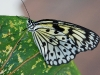 110205_butterflygarden_key_west14