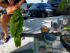 110206_beach_key_west04