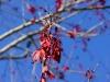 110209_senetor_tree13