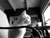 110211_ghost_cat01