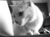 110211_ghost_cat02