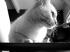 110211_ghost_cat03