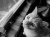110211_ghost_cat05