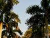 110215_ringling_park22
