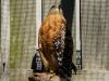 110216_mote_birds03