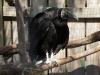 110216_mote_birds05