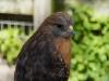110216_mote_birds08