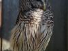 110216_mote_birds09