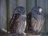 110216_mote_birds10