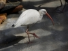 110216_mote_birds11
