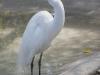 110216_mote_birds13
