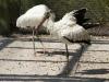110216_mote_birds15